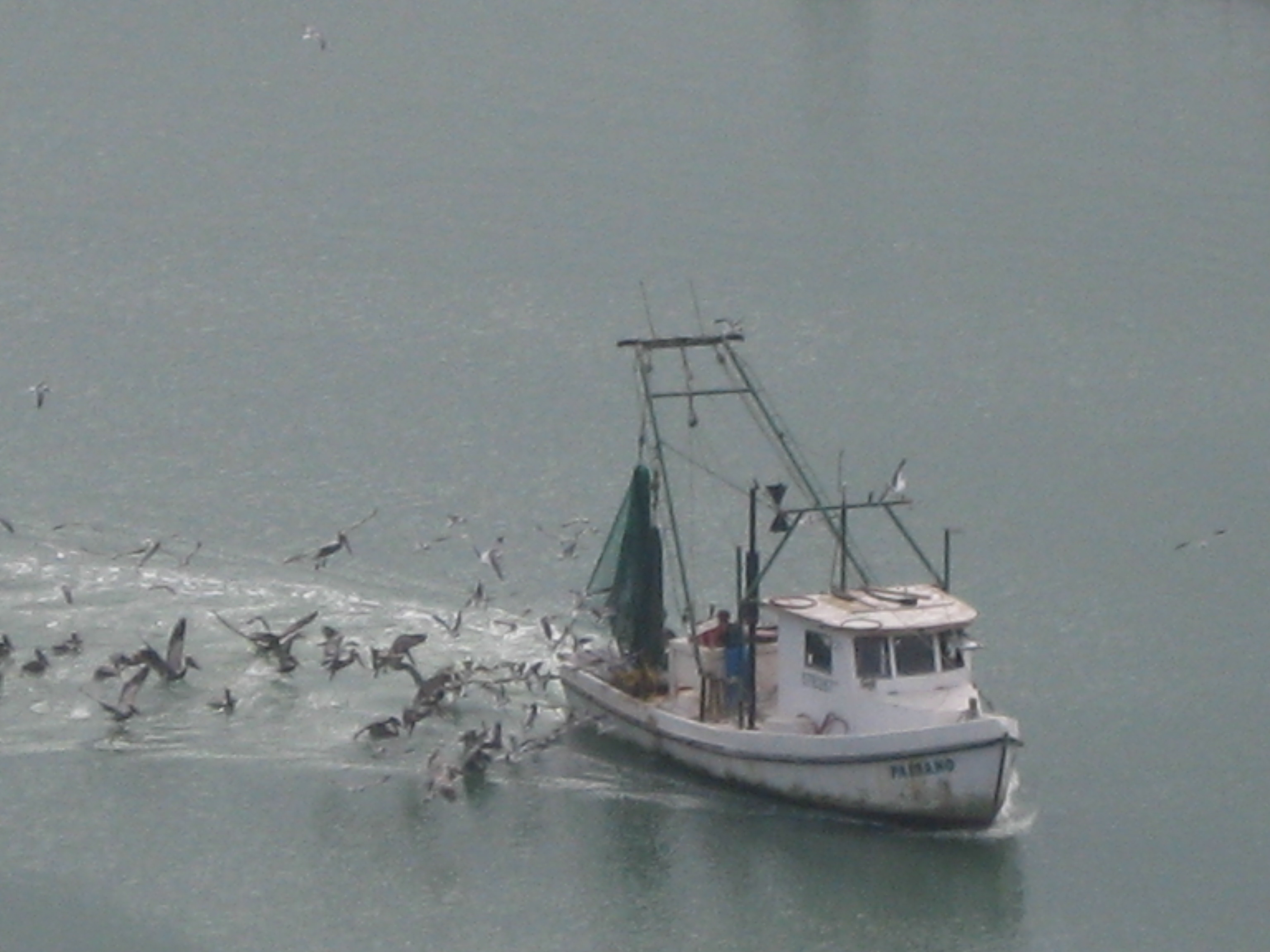Picture Of Corpus Christi Bay Fishing Boat And Many