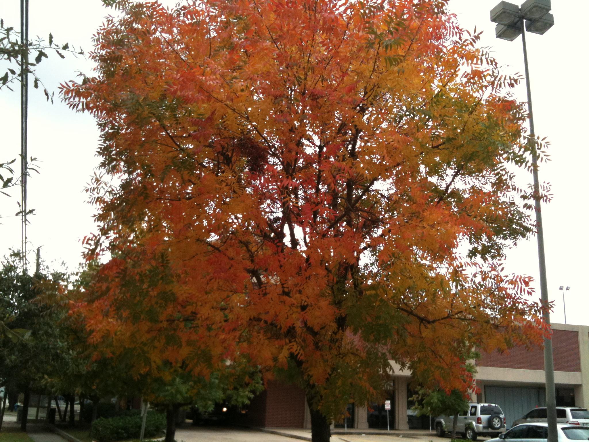 Do Trees Change Color In Houston  « Texas Liberal a258ba56a7e9